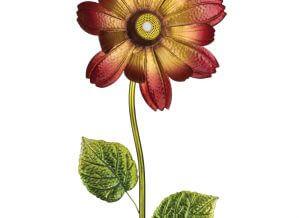 Wireless Speaker Sunburst Flower Stake